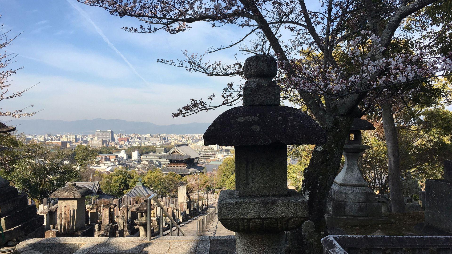 金戒光明寺の桜12