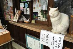umenomiyataisha-cat-03