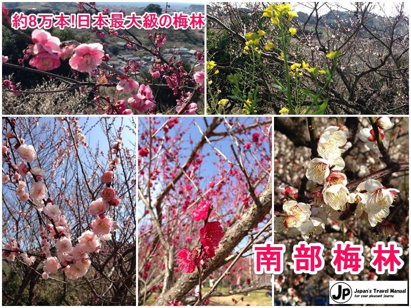 minabe_plumforest_01_jp