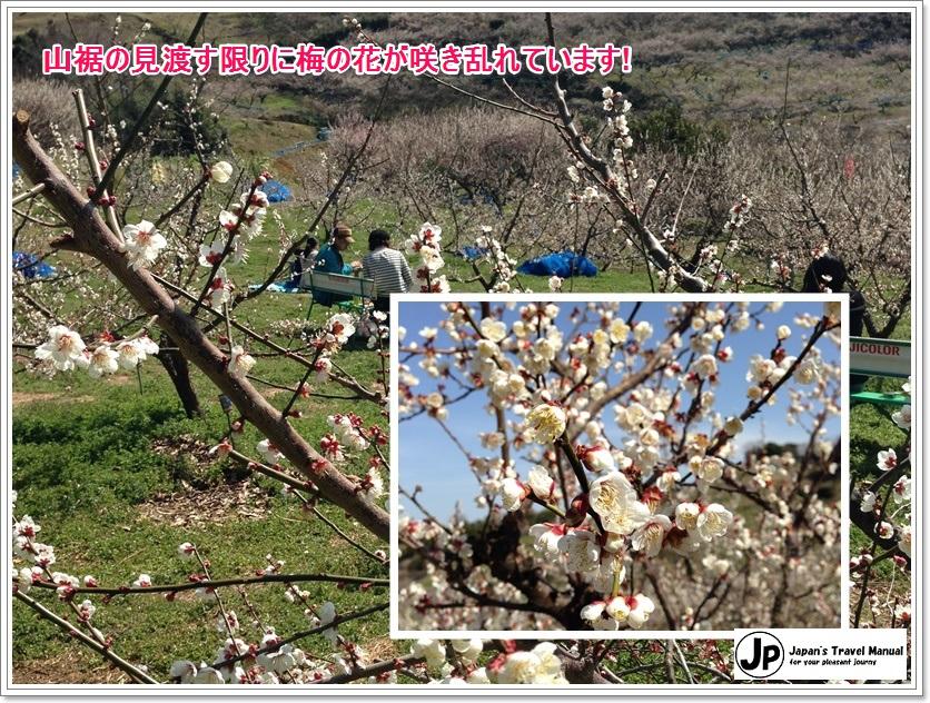 minabe_plumforest_02_jp