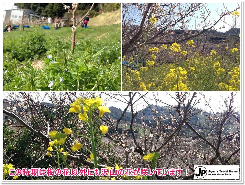 minabe_plumforest_05_jp