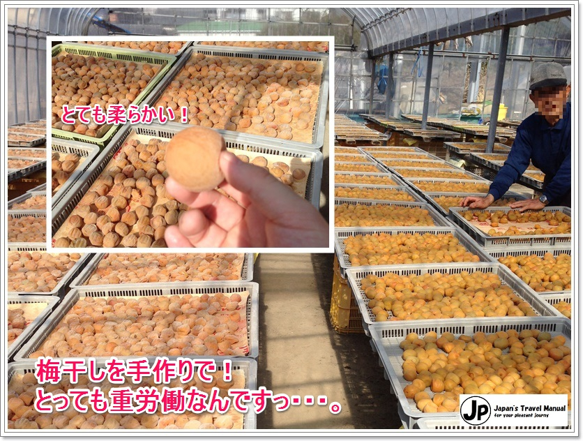minabe_plumforest_06_jp