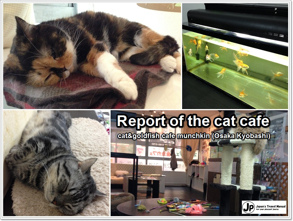 Report of the cat cafe:\