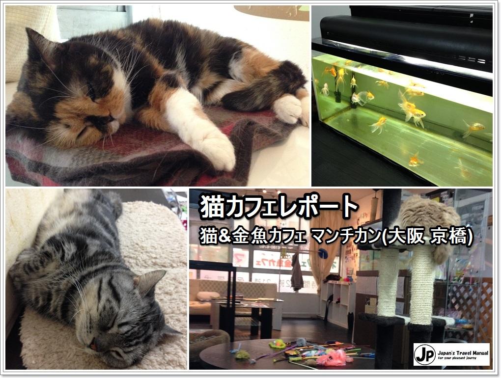 munchkin03_jp