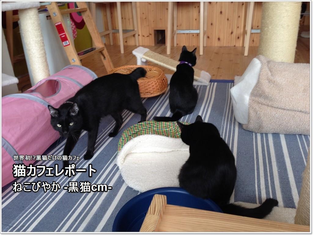 nekobiyaka-01_jp
