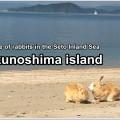 ohkunoshima-01_en