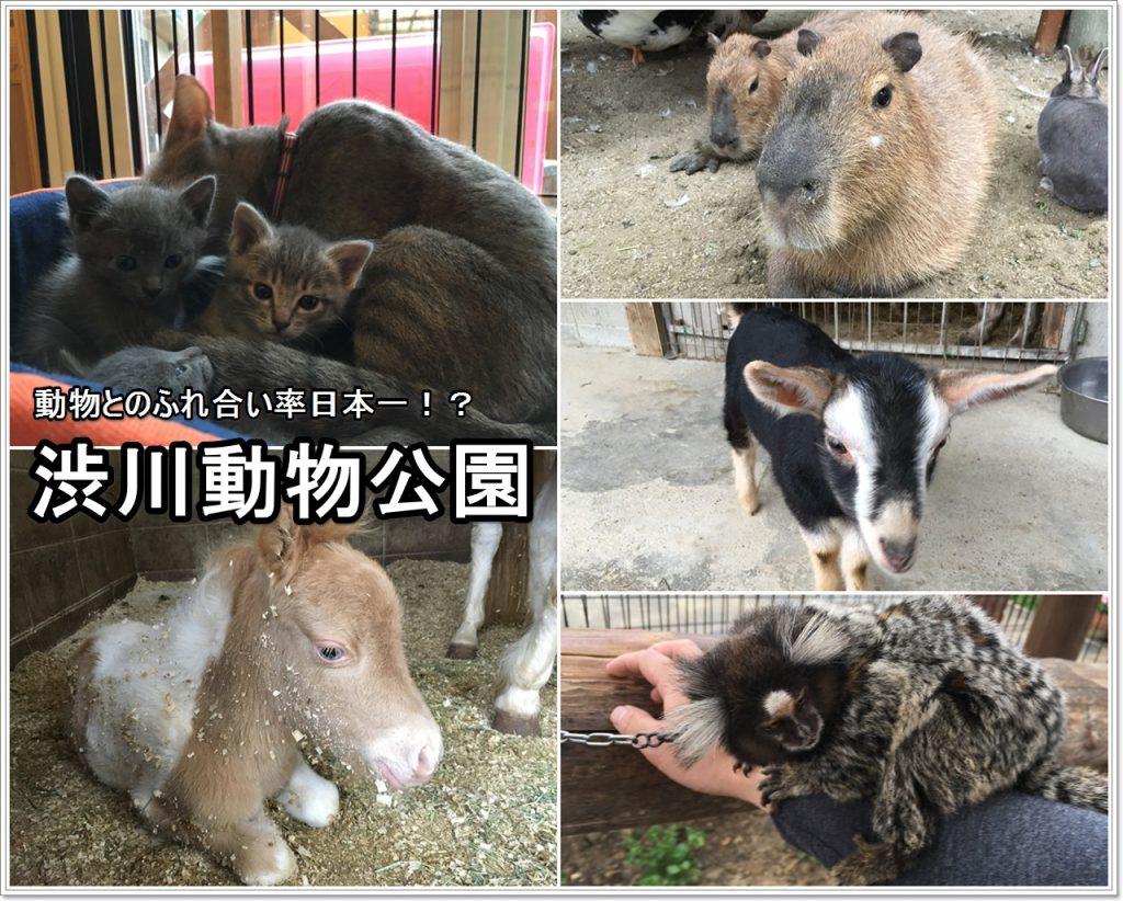 shibukawa-zoo-01_jp