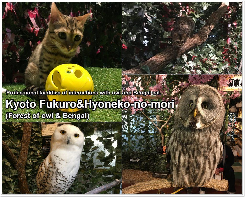 forest_of_owl-09_en