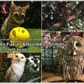 forest_of_owl-09_en