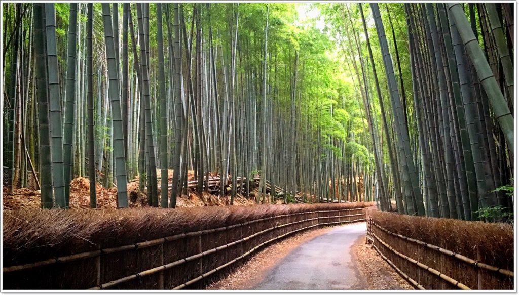 bamboo-road-04