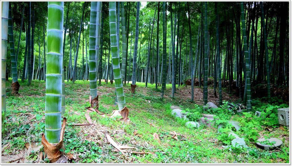 bamboo-road-08