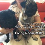 Notification of transfer of the pug-cafe 'LivingRoom'.