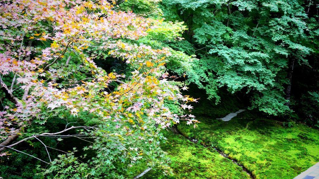 瑠璃光院-瑠璃の庭01