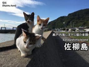 sanagishima-01-txt