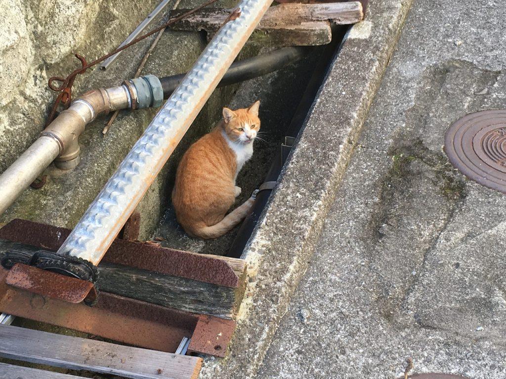 sanagishima-cat-02