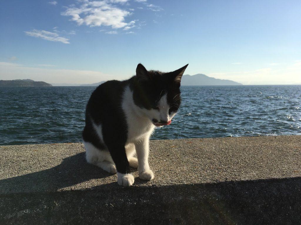 sanagishima-cat-06