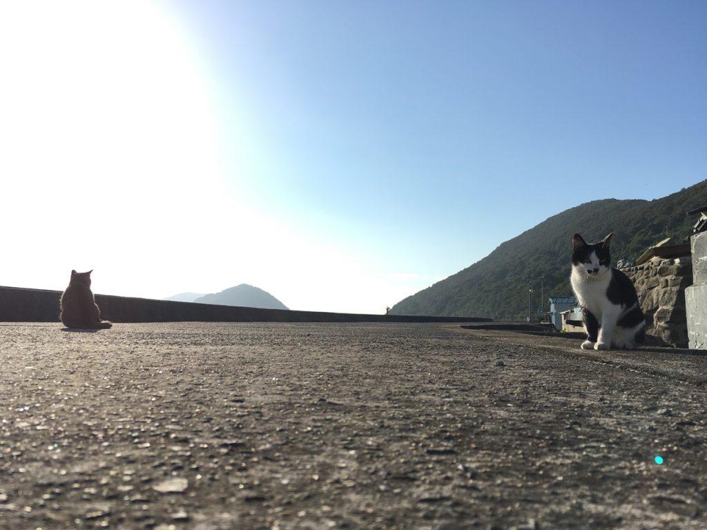 sanagishima-cat-09