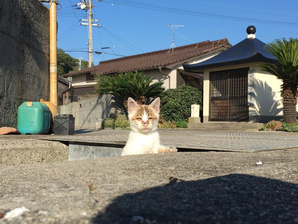 sanagishima-cat-11