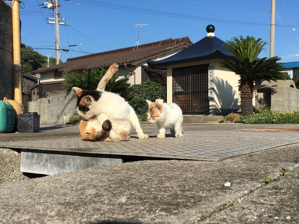 sanagishima-cat-14