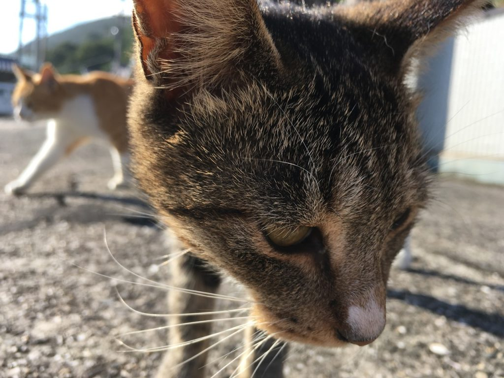 sanagishima-cat-19