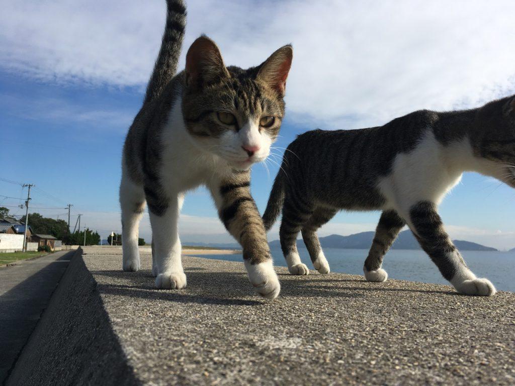 sanagishima-cat-31