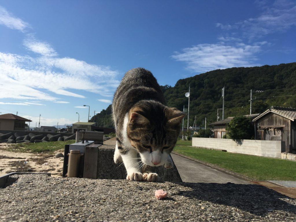 sanagishima-cat-39