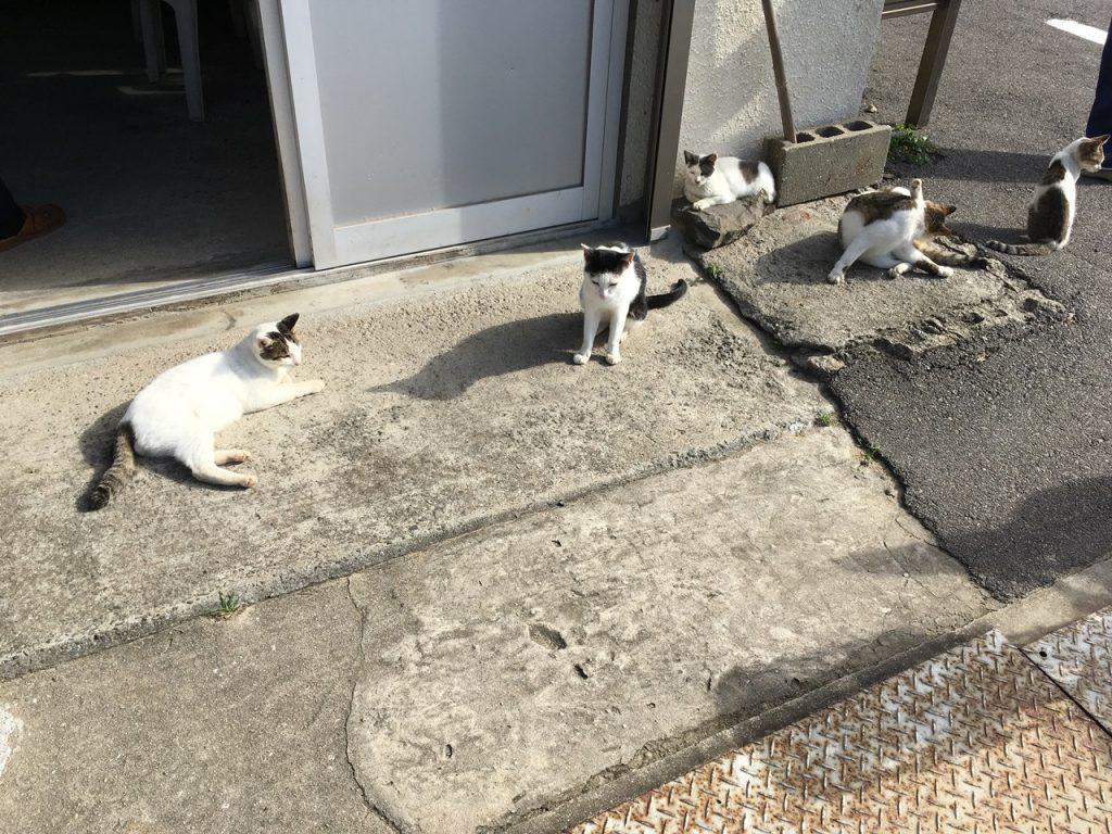 sanagishima-cat-41