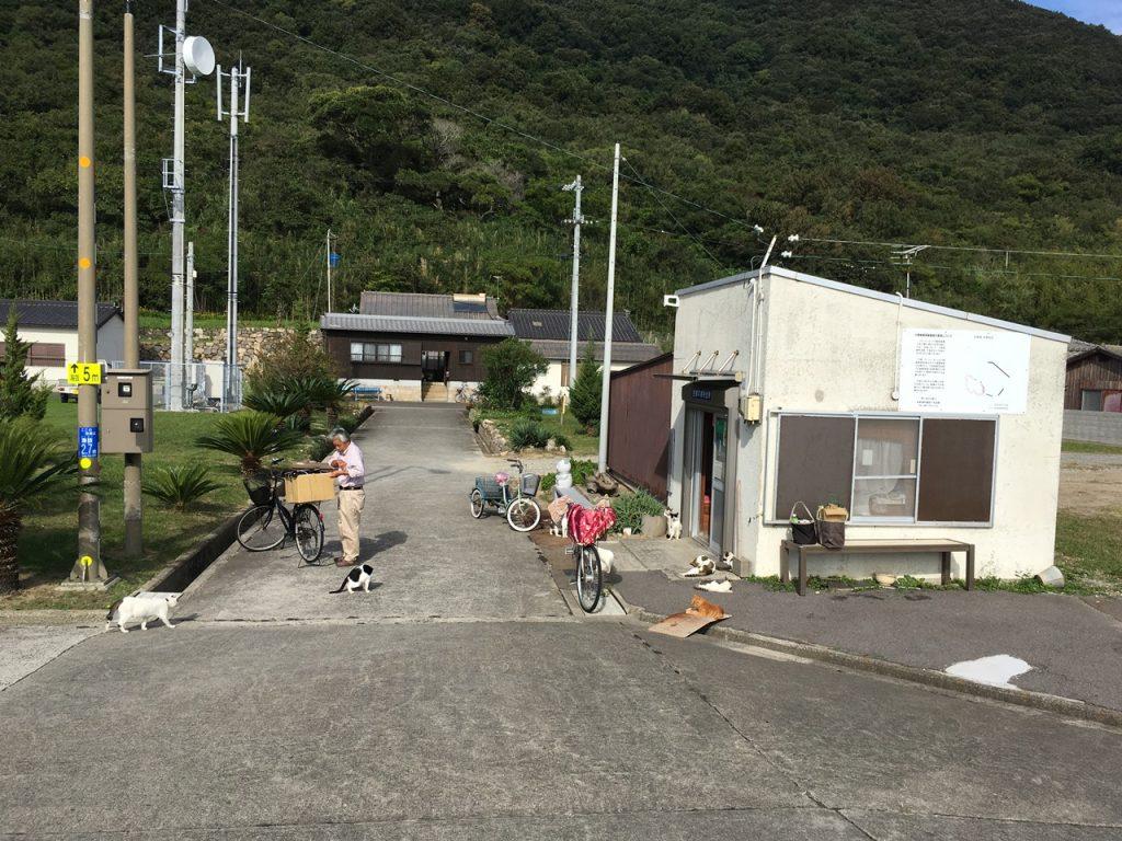 sanagishima-cat-41-2