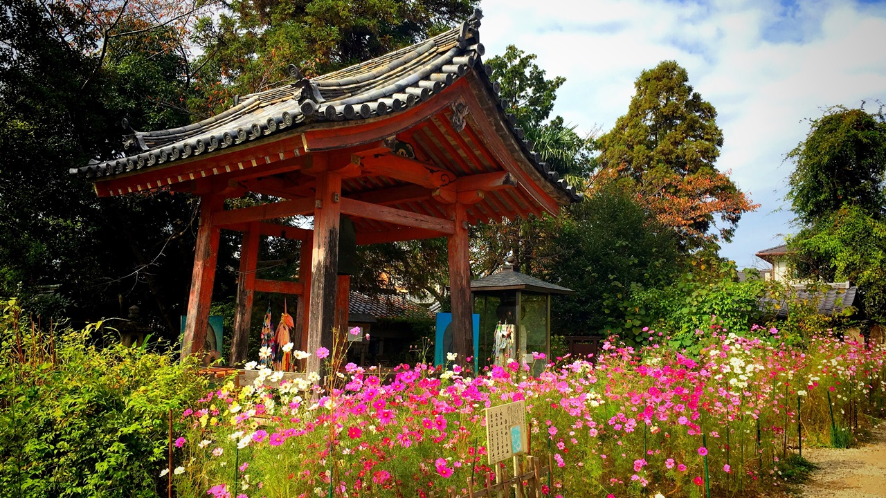 The highlights and how to get to Hannya-ji Temple (Cosmos Temple)
