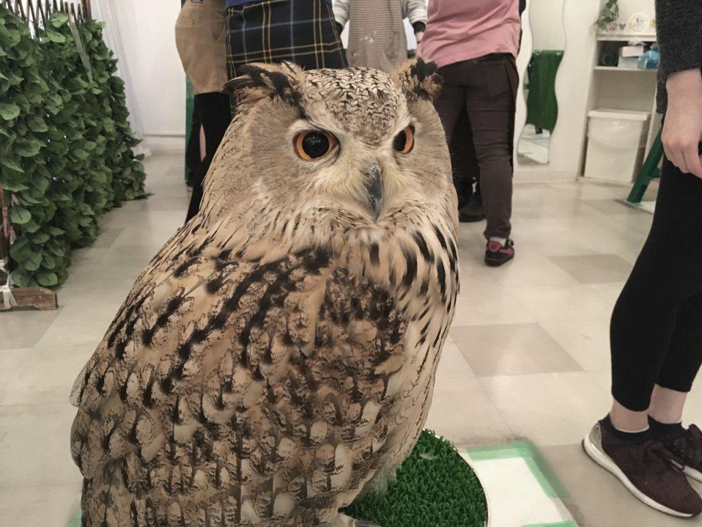 owlfamily-13