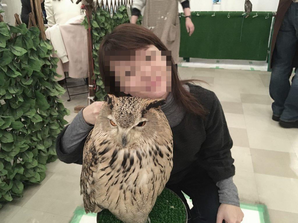 owlfamily-14