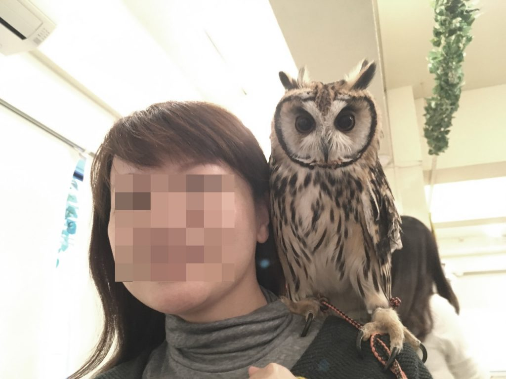 owlfamily-17