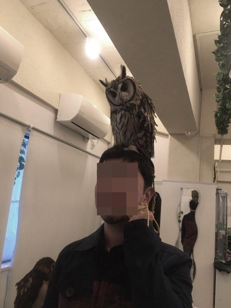 owlfamily-18