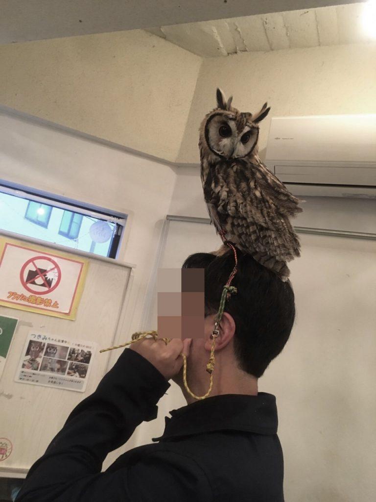 owlfamily-19