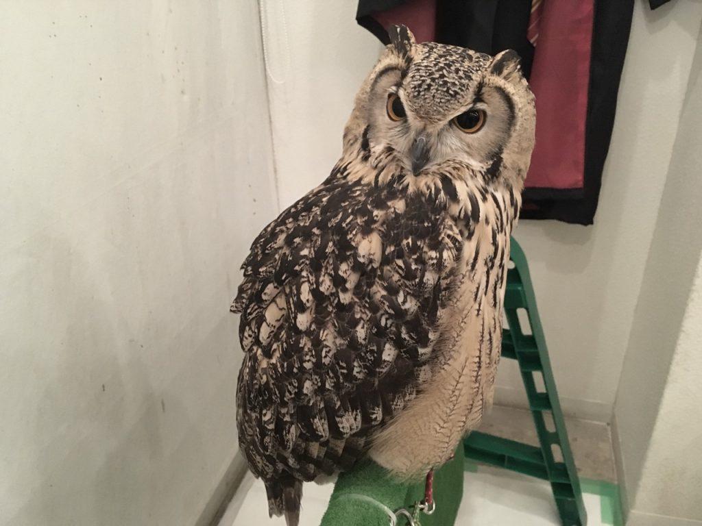 owlfamily-20