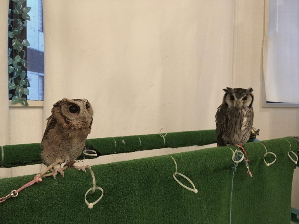 owlfamily-22