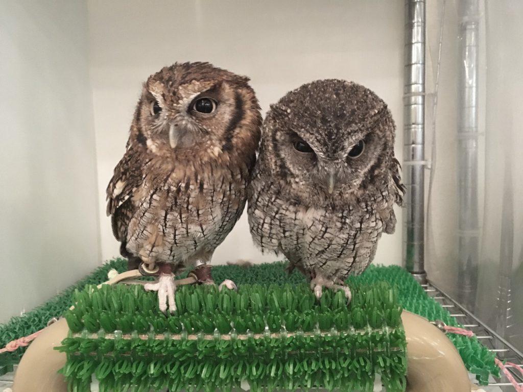 owlfamily-27