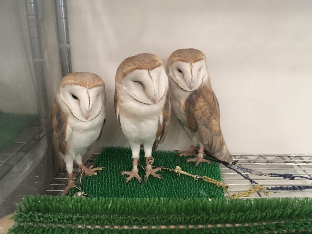 owlfamily-30