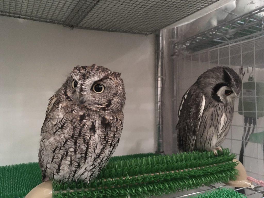 owlfamily-34