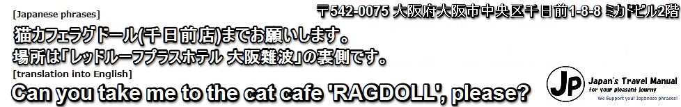 ragdoll-sen-31