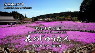 花のじゅうたん-テキスト