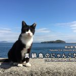 Manabe-shima Island:Cat island in the Seto Inland Sea