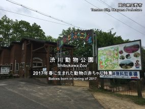 shibukawazoo2017-02