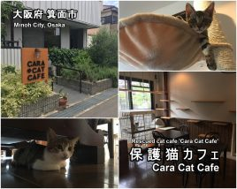cara-cat-cafe-01-txt