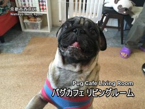 pug-cafe-new-00