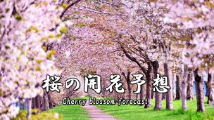 桜の開花予想-txt