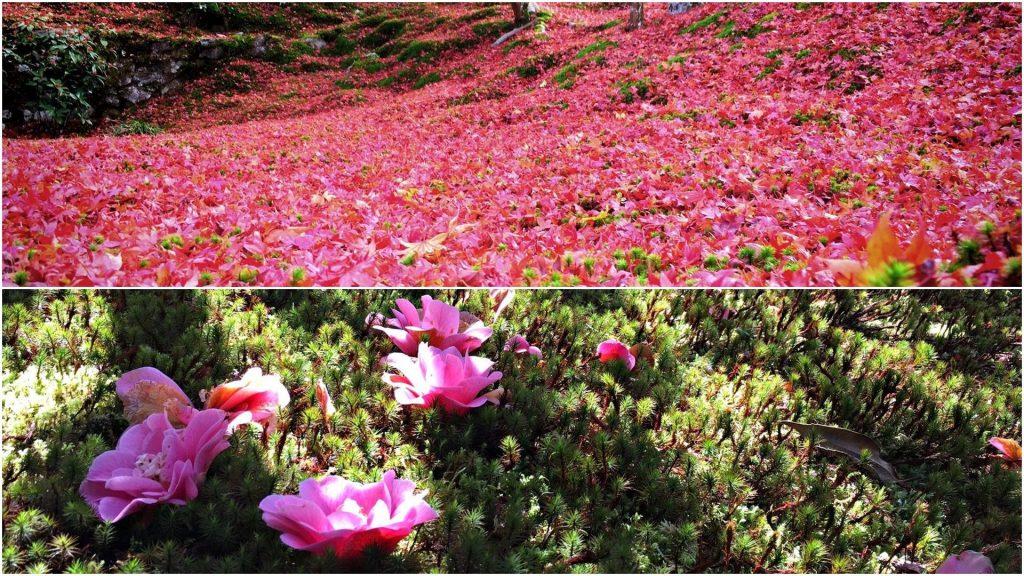 霊鑑寺-散り紅葉と散り椿