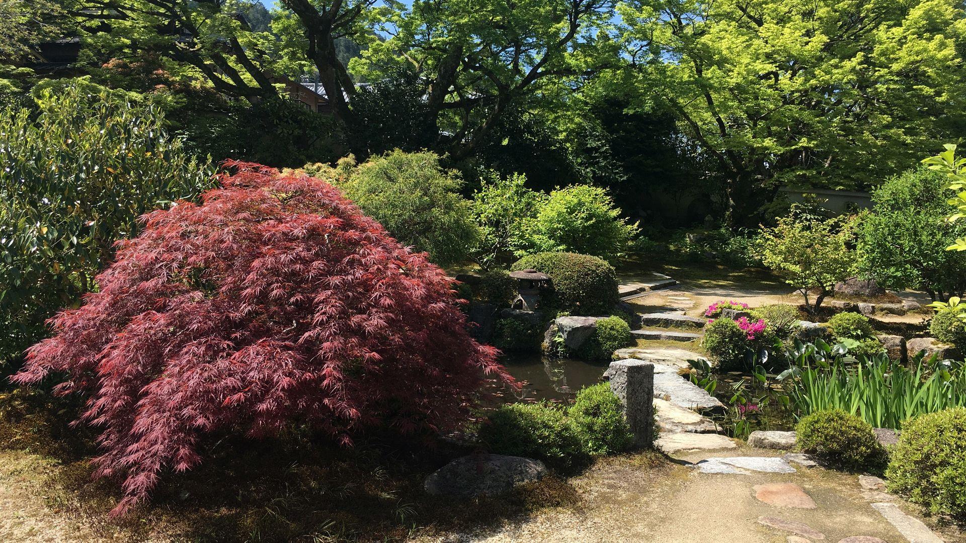 実光院-西庭園