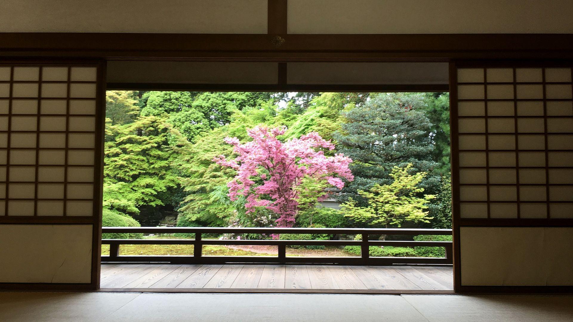 表書院の能の間から眺める庭園
