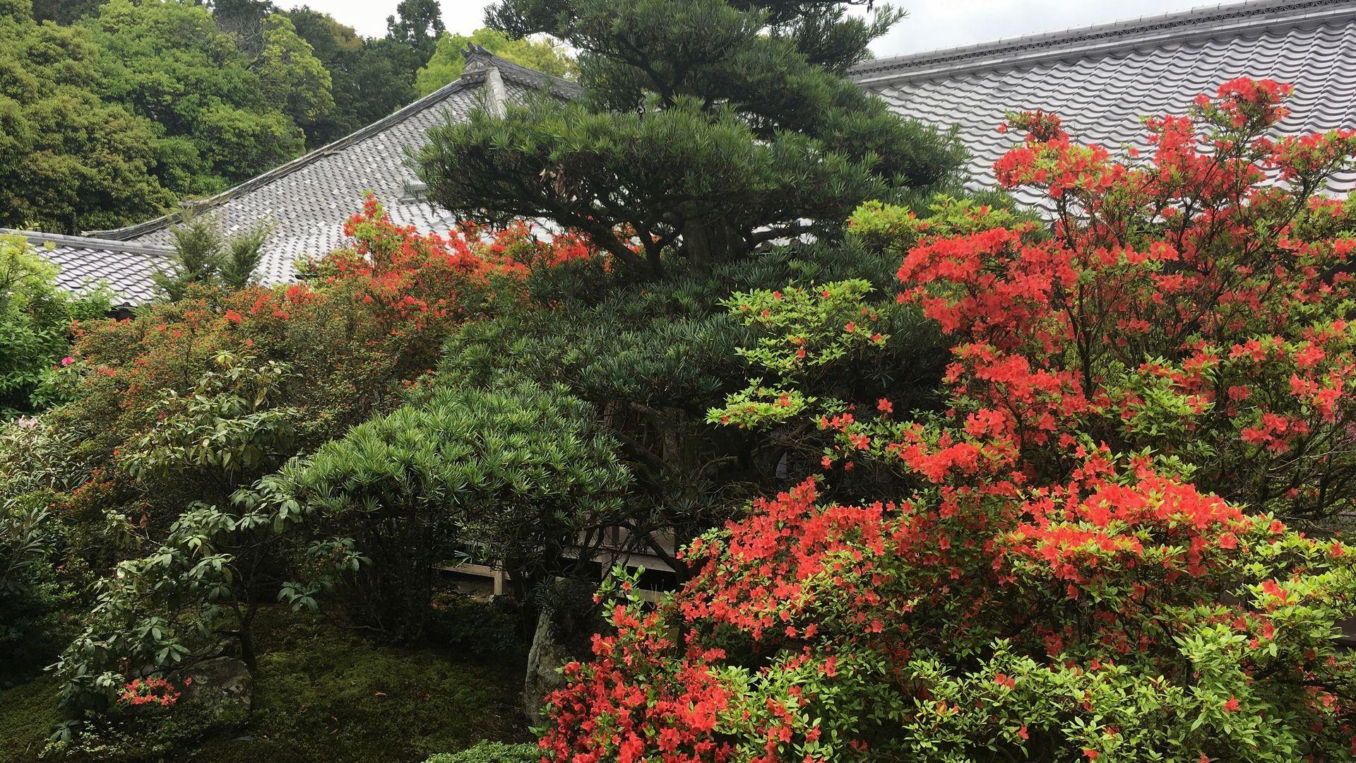 随心院の中庭